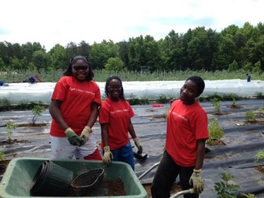 Volunteer at Orchard