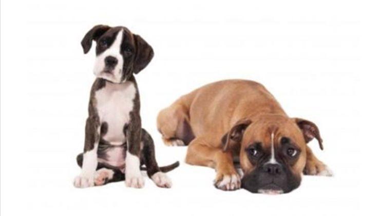 Pet Food Distribution - NW