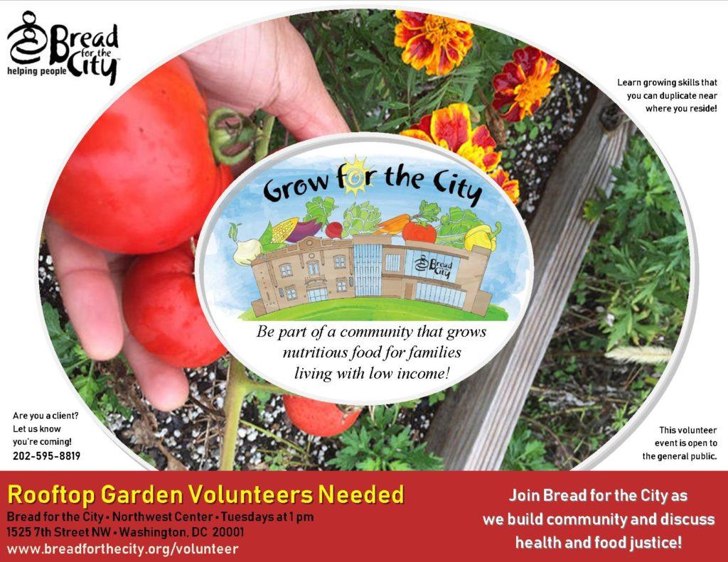 Volunteer at Rooftop Garden